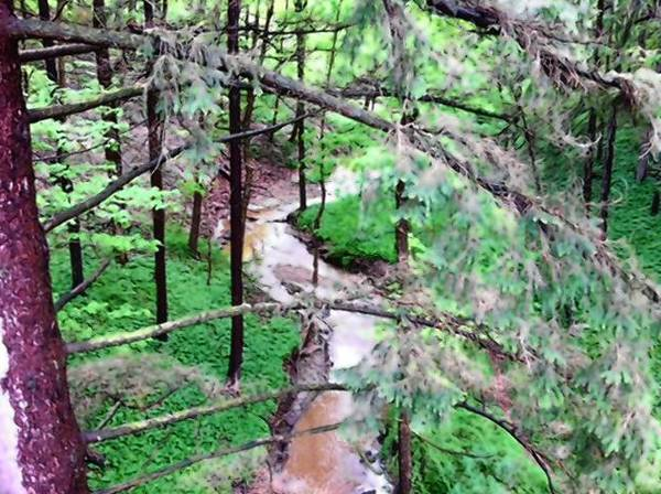 A stream runs through a ravine along Bluff's Edge in Lake Forest. The city recently banned the construction of fences in ravines.