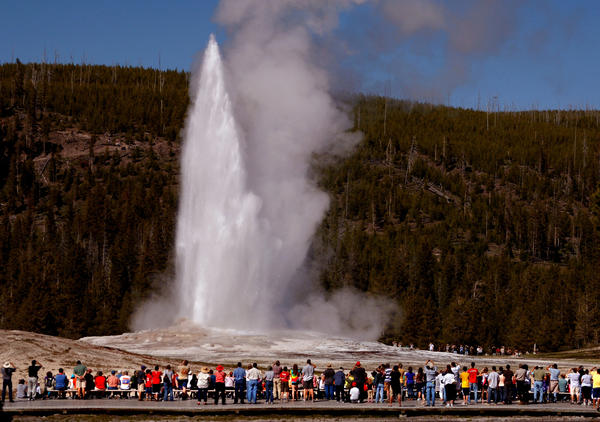Old Faithful geyser in Yellowstone National Park draws thousands of tourists every year.