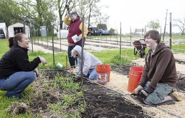 Kathy Gill, from left, Cecilia Solecki per another photo, Jean Guyader and Grant Blume work at the St. Francis de Sales Jubilee Garden in Lake Zurich.