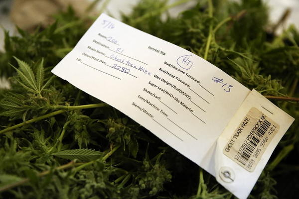 A harvest slip sits atop a pile of untrimmed marijuana flowers at the River Rock Medical Marijuana Center in Denver.