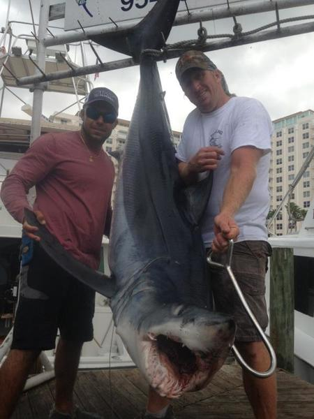 The 300-pound mako shark caught on Fort Lauderdale charter boat Out of the Blue with Capt. Adam Reckert.