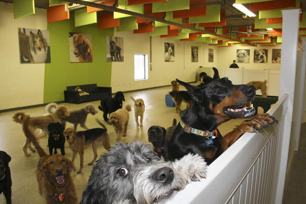 Dogs play at Adogo Pet Hotel in Minnetonka, Minn., whose owner plans to build a similar facility in Vernon Hills.