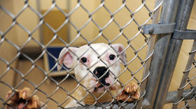BARCS suspends dog intake