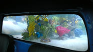 'Fish Tank Kings' transform VW minivan into awesome aquarium