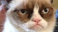 Grumpy Cat, the Internet feline celebrity known for her disdainful expression, has a movie deal.