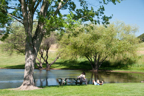 A duck pond  and picnic area are an idyllic spot to relax and nibble on some of the handmade cheeses from the Marin French Cheese Co. near Petaluma, Calif.