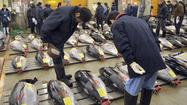 A team of scientists who have been tracking radiation in bluefin tuna since the 2011 tsunami that crippled the Fukushima Daichi power plant have a message for fearful American eaters: Stop worrying about the health effects of eating fish that carried the radiation from Japan to U.S. shores.