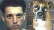 The man who killed a dog during a string of home burglaries on King Street in College Park was sentenced Thursday to seven years in prison for the crime, police say.