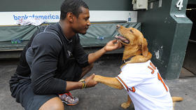 Orioles pet calendar photo shoot [Pictures]