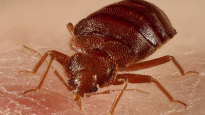 Bedbug lawsuits on the increase