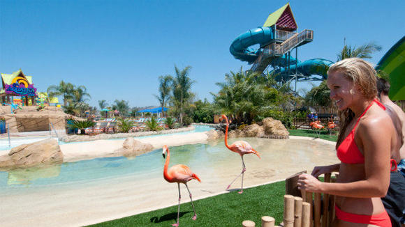 The flamingo encounter at SeaWorld San Diego's Aquatica water park.