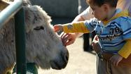 Donkey therapy helps children, adults