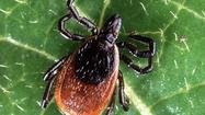 Though Emmet and Charlevoix counties have had no reports of black-legged ticks, the species has moved into counties north and south of the region.