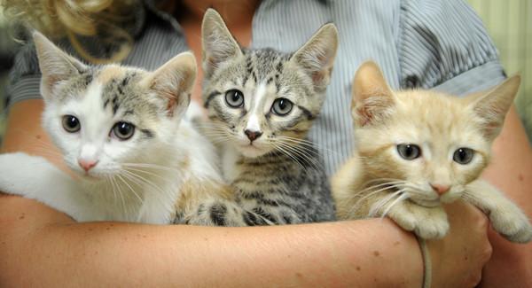 Free Cat Adoption Baltimore
