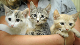 Free cat and kitten adoptions