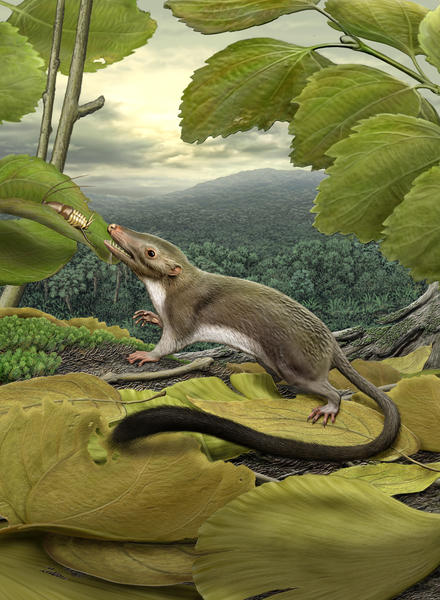 An artist¿s rendering of the hypothetical placental ancestor, a small, insect-eating animal.