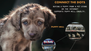 CHICAGO – A group of consumers filed a lawsuit in LaSalle County Circuit Court against the Chicago pet store chain Furry Babies, Inc., claiming that the store sold sick puppies from puppy mills to unsuspecting consumers in violation of state consumer protection laws.