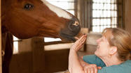 Pictures: Manes & Motions Therapeutic Riding Center In Middletown