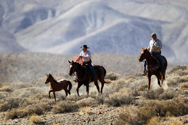 Auction sends wild horses to sanctuary -- or slaughter