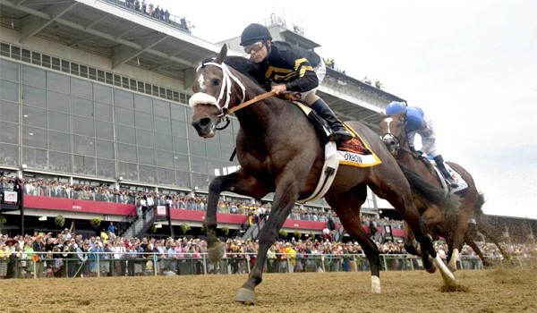 Hall of Fame jockey Gary Stevens rides Oxbow to victory at the Preakness, on Saturday he'll race for the Belmont Stakes.