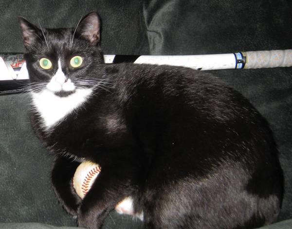 Mustachio, an 18 month black domestic shorthair, is owned by Susan Michaels of Allentown.