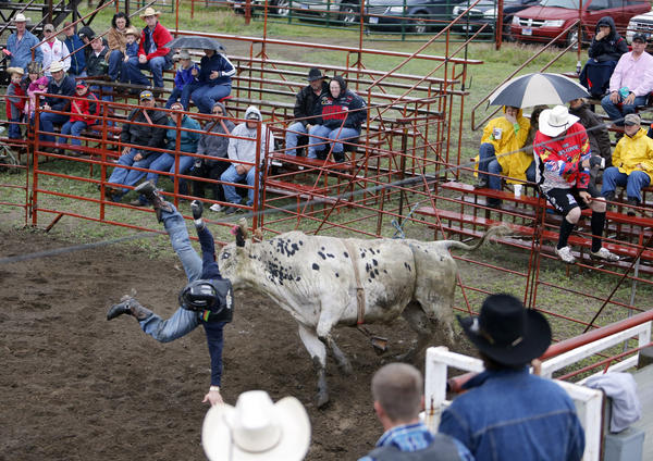 Matthew Rhymer, of Stanford, Va., gets tossed into the air Saturday as he competes at the Ipswich Trail Days 2013 Bullriding Bonanza. American News Photo by John Davis