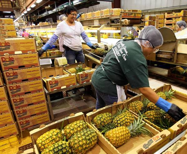 Dole Food, which helped make pineapples one of Hawaiis top exports, has sprawling farms of the fruit in the Aloha State. Above, workers pack whole pineapples for shipment at a Dole plantation in Wahiawa, Hawaii.