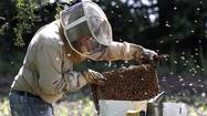 Commercial beekeeper Tim May has worked 16-hour days, six or seven days a week for the past month to get more than a thousand hives with millions of honeybees settled in the countryside of northern Illinois and southern Wisconsin.