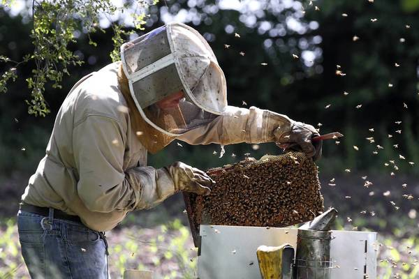 Tim May, a third-generation beekeeper in Marengo, estimates he lost 80 percent of his 1,400 hives in the fall and winter.