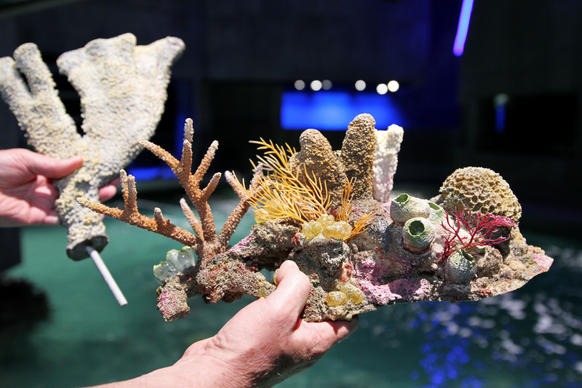 General curator Jack Cover shows off coral reefs against the backdrop of the National Aquarium's newest exhibit, Blacktip Reef, which opens on July 10th. The reef mimics a biodiverse Indo-Pacific reef and is complete with all man-made reefs.