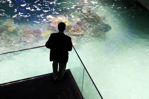 A bystander watches as the finishing touches are put on the National Aquarium's newest exhibit, Blacktip Reef.