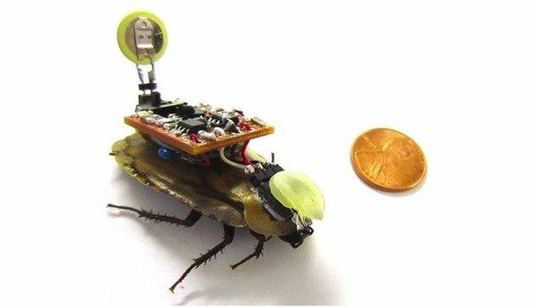 599x345 - Cyborg Cockroaches - Science and Research