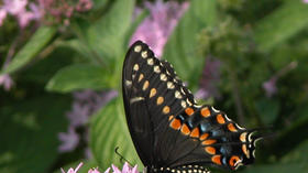 Norfolk Botanical Garden: Enjoy butterfly house and outdoor glass sculptures summer and early fall