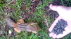 VIDEO: These chipmunks have guts!