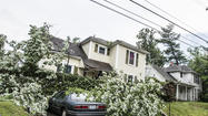 Three houses were struck by a large, old Maple Tree winds blew over on Lexington Avenue in Danville Thursday afternoon.