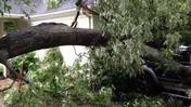 Tree falls on car, misses house