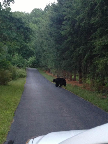 A bear was spotted on Winding Ride Road in Southington on Wednesday night.