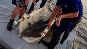 SeaWorld Orlando rescues dolphin, releases rehabilitated sea cow
