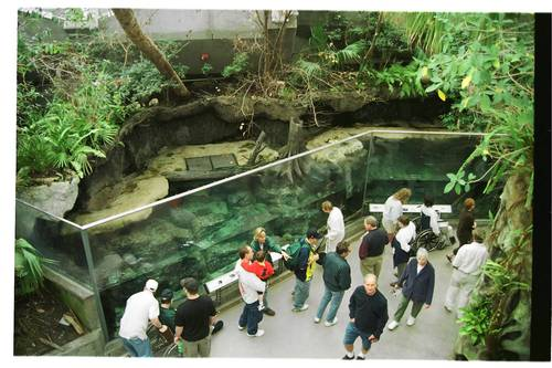 Visitors at the Florida Aquarium in Tampa get an up-close look at a re-created wetland that features native fish and birds as well as a pair of river otters.