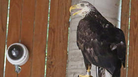 Eagle exhibit at Audubon Society