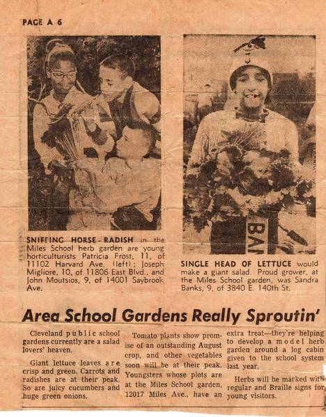 In this 1964 clipping from the Cleveland Press, fourth-grader Sandy Banks displays the prize-winning head of lettuce she grew in the summer gardening program at Miles Elementary School in Cleveland.