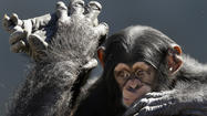 Rewriting rules on chimps