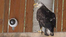 Video: Eagle webcam at Audubon
