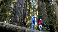 A jaunt with the giants of Humboldt County's redwood corridor