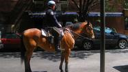 Man arrested after officer says he punched police horse