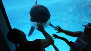 SeaWorld-owned killer whale calf dies in Europe