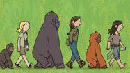 'Primates' graphic novel explores work of Goodall, Fossey, Galdikas
