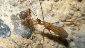 New species of assassin bug found sniping in cave