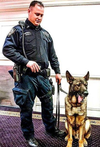 An NYPD photo of Officer Vincent Tieniber and Bear the dog.