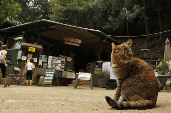 A cat preens near Adams' Pack Station as hikers walk up to the store to buy national park parking passes.